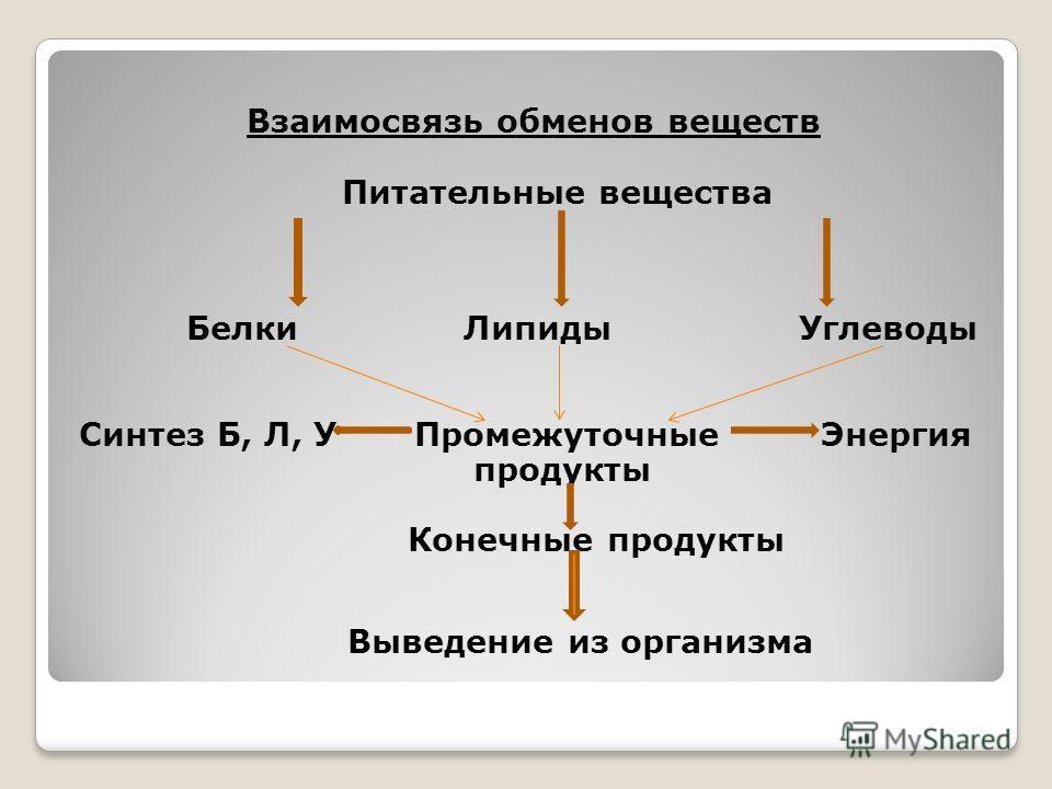 Взаимосвязь обменов веществ Питательные вещества Белки Липиды Углеводы Синтез Б, Л, У Промежуточные Энергия продукты Конечные продукты Выведение из организма