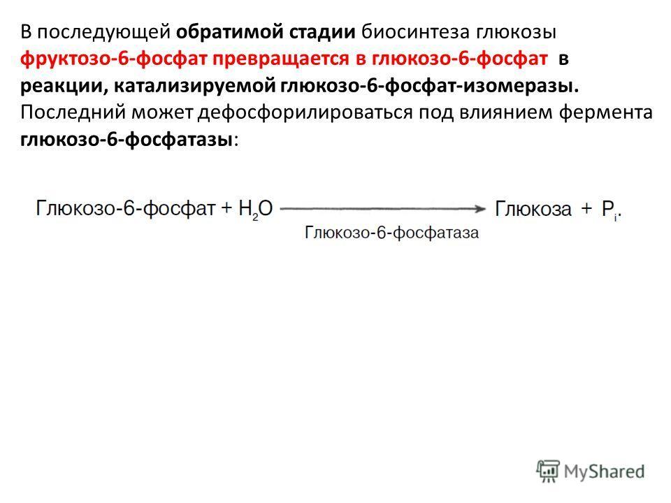 В последующей обратимой стадии биосинтеза глюкозы фруктозо-6-фосфат превращается в глюкозо-6-фосфат в реакции, катализируемой глюкозо-6-фосфат-изомеразы. Последний может дефосфорилироваться под влиянием фермента глюкозо-6-фосфатазы: