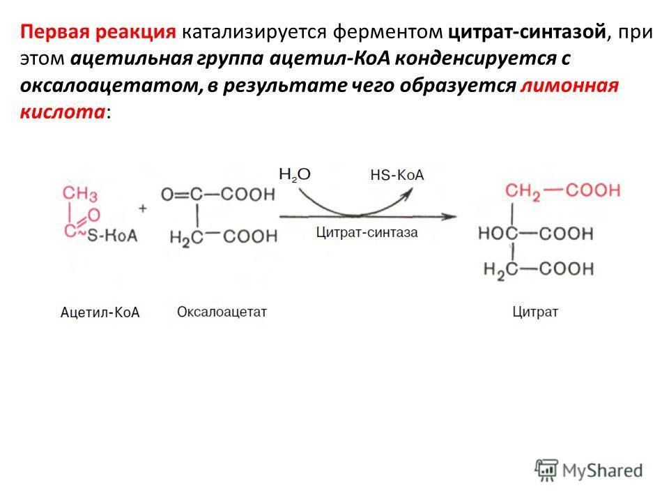 Первая реакция катализируется ферментом цитрат-синтазой, при этом ацетильная группа ацетил-КоА конденсируется с оксалоацетатом, в результате чего образуется лимонная кислота: