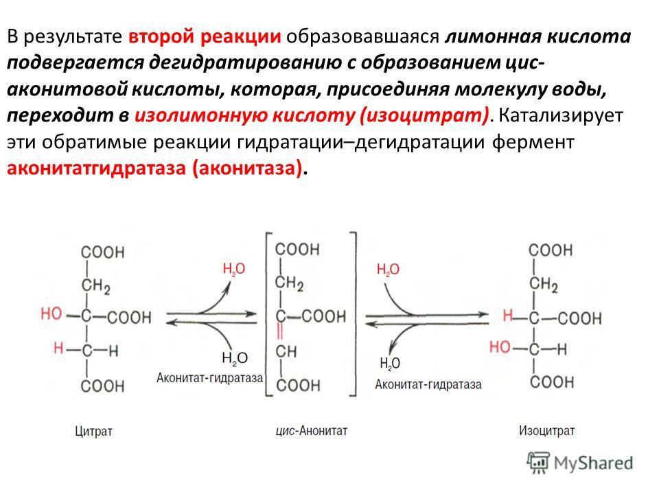 В результате второй реакции образовавшаяся лимонная кислота подвергается дегидратированию с образованием цис- аконитовой кислоты, которая, присоединяя молекулу воды, переходит в изолимонную кислоту (изоцитрат). Катализирует эти обратимые реакции гидр