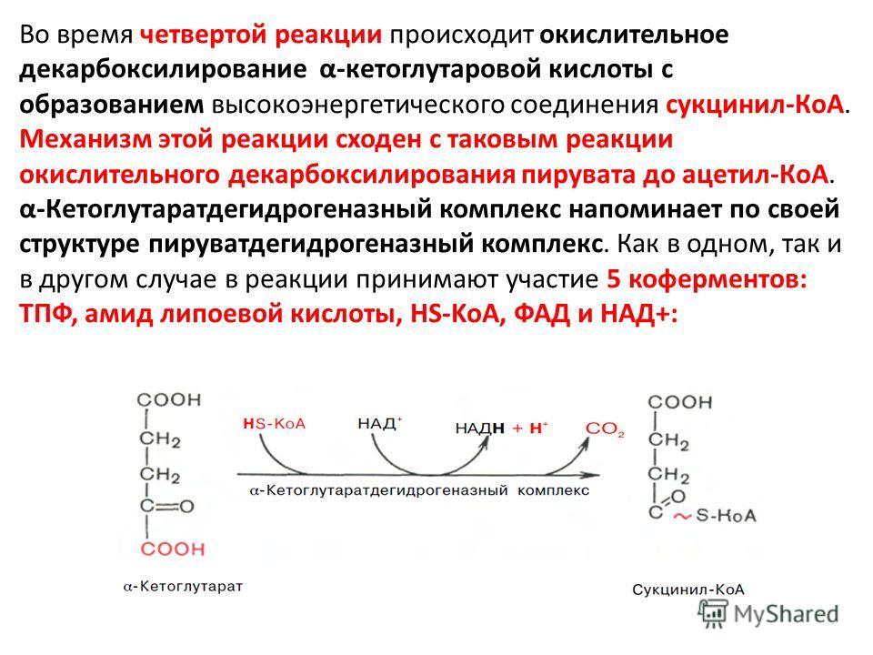 Во время четвертой реакции происходит окислительное декарбоксилирование α-кетоглутаровой кислоты с образованием высокоэнергетического соединения сукцинил-КоА. Механизм этой реакции сходен с таковым реакции окислительного декарбоксилирования пирувата