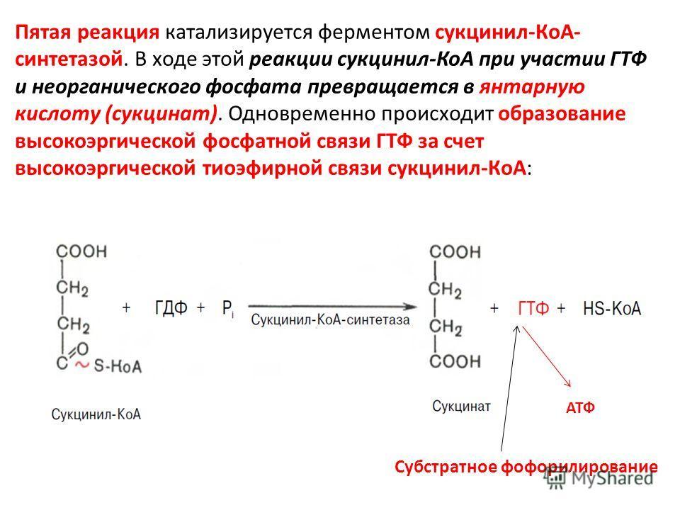 Пятая реакция катализируется ферментом сукцинил-КоА- синтетазой. В ходе этой реакции сукцинил-КоА при участии ГТФ и неорганического фосфата превращается в янтарную кислоту (сукцинат). Одновременно происходит образование высокоэргической фосфатной свя