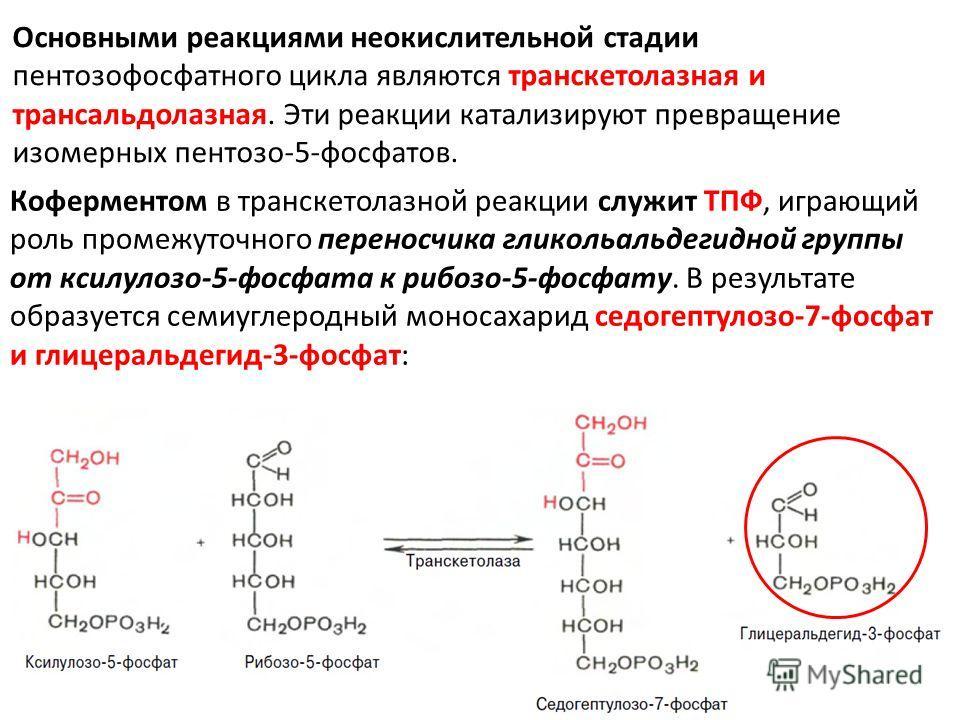 Основными реакциями неокислительной стадии пентозофосфатного цикла являются транскетолазная и трансальдолазная. Эти реакции катализируют превращение изомерных пентозо-5-фосфатов. Коферментом в транскетолазной реакции служит ТПФ, играющий роль промежу