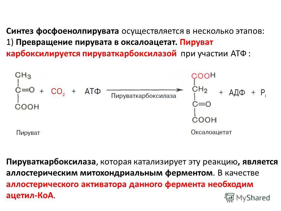 Синтез фосфоенолпирувата осуществляется в несколько этапов: 1) Превращение пирувата в оксалоацетат. Пируват карбоксилируется пируваткарбоксилазой при участии АТФ : Пируваткарбоксилаза, которая катализирует эту реакцию, является аллостерическим митохо