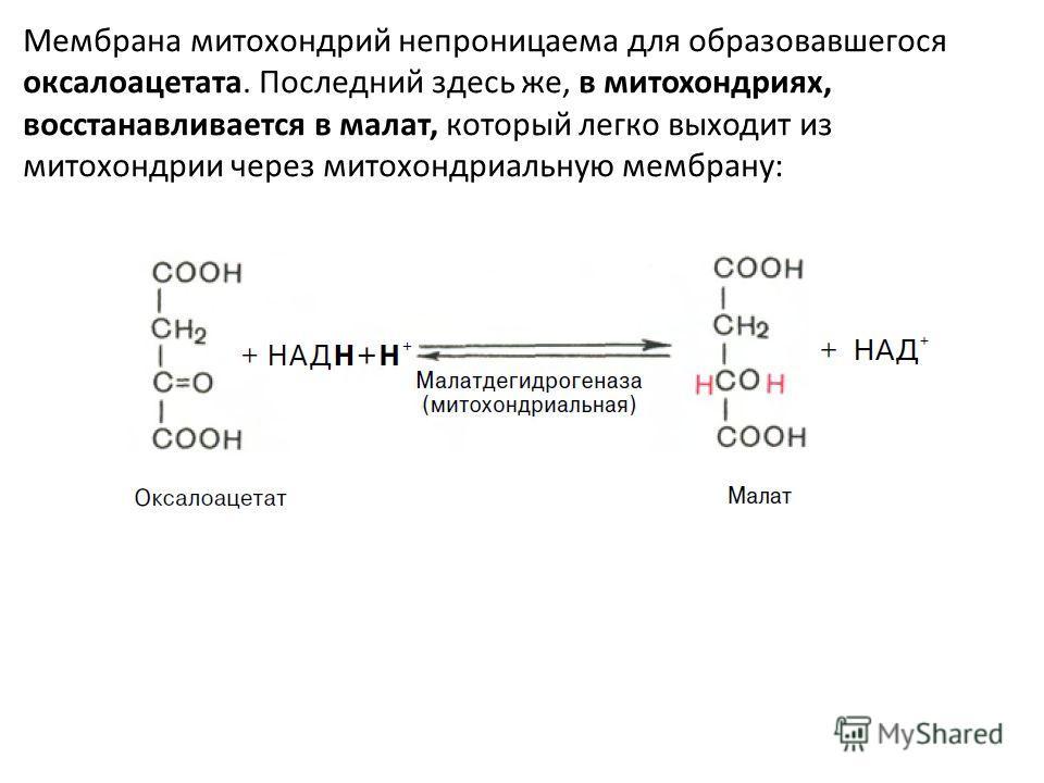 Мембрана митохондрий непроницаема для образовавшегося оксалоацетата. Последний здесь же, в митохондриях, восстанавливается в малат, который легко выходит из митохондрии через митохондриальную мембрану: