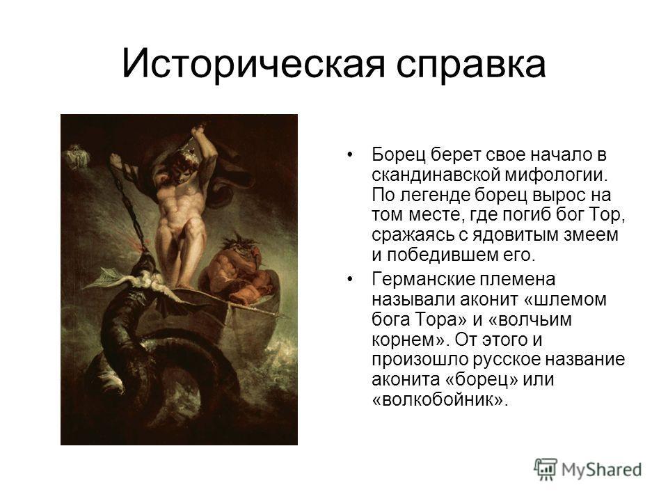 Историческая справка Борец берет свое начало в скандинавской мифологии. По легенде борец вырос на том месте, где погиб бог Тор, сражаясь с ядовитым змеем и победившем его. Германские племена называли аконит «шлемом бога Тора» и «волчьим корнем». От э