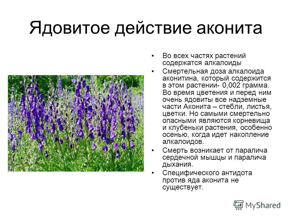 Ядовитое действие аконита Во всех частях растений содержатся алкалоиды Смертельная доза алкалоида аконитина, который содержится в этом растении- 0,002 грамма. Во время цветения и перед ним очень ядовиты все надземные части Аконита – стебли, листья, ц