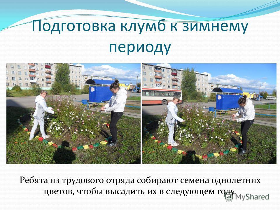 Подготовка клумб к зимнему периоду Ребята из трудового отряда собирают семена однолетних цветов, чтобы высадить их в следующем году.