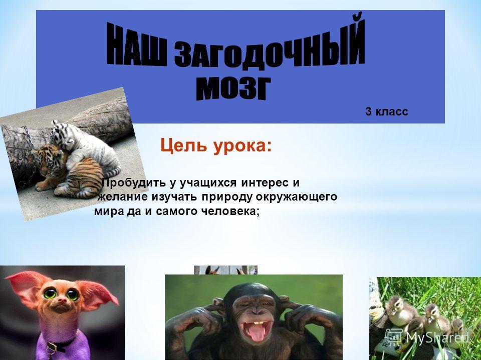 3 класс Цель урока: - Пробудить у учащихся интерес и желание изучать природу окружающего мира да и самого человека;