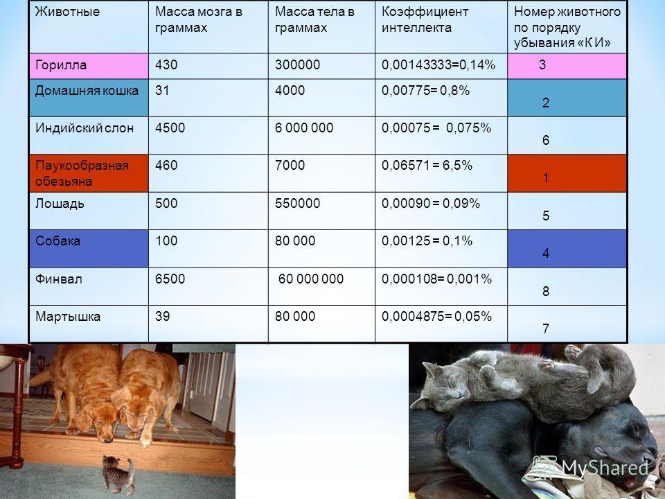 ЖивотныеМасса мозга в граммах Масса тела в граммах Коэффициент интеллекта Номер животного по порядку убывания «К И» Горилла4303000000,00143333=0,14% 3 Домашняя кошка3140000,00775= 0,8% 2 Индийский слон45006 000 0000,00075 = 0,075% 6 Паукообразная обе