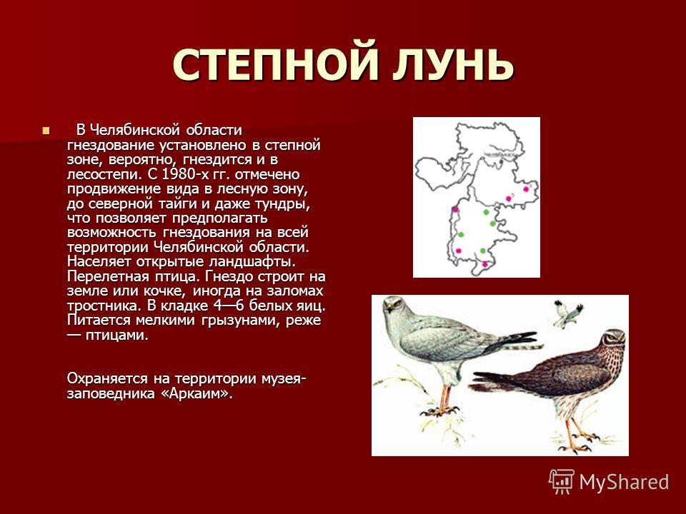 СТЕПНОЙ ЛУНЬ В Челябинской области гнездование установлено в степной зоне, вероятно, гнездится и в лесостепи. С 1980-х гг. отмечено продвижение вида в лесную зону, до северной тайги и даже тундры, что позволяет предполагать возможность гнездования на
