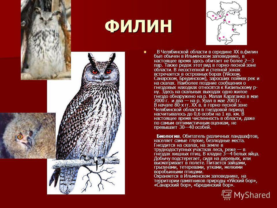 ФИЛИН В Челябинской области в середине XX в.филин был обычен в Ильменском заповеднике, в настоящее время здесь обитает не более 23 пар. Также редок этот вид в горно-лесной зоне области. В лесостепной и степной зонах встречается в островных борах (Уйс