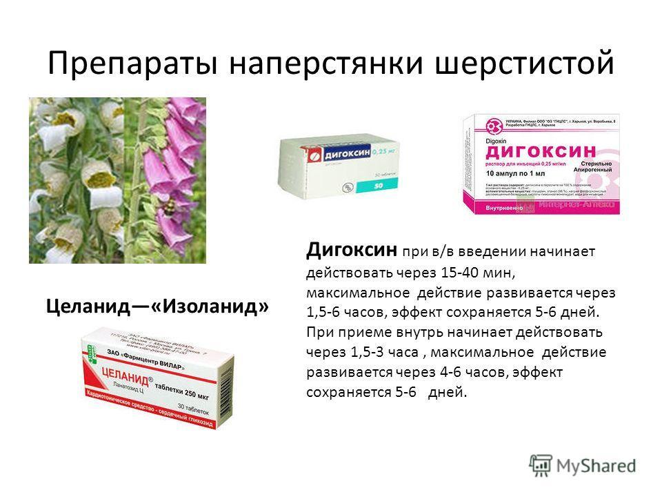 Препараты наперстянки шерстистой Дигоксин при в/в введении начинает действовать через 15-40 мин, максимальное действие развивается через 1,5-6 часов, эффект сохраняется 5-6 дней. При приеме внутрь начинает действовать через 1,5-3 часа, максимальное д