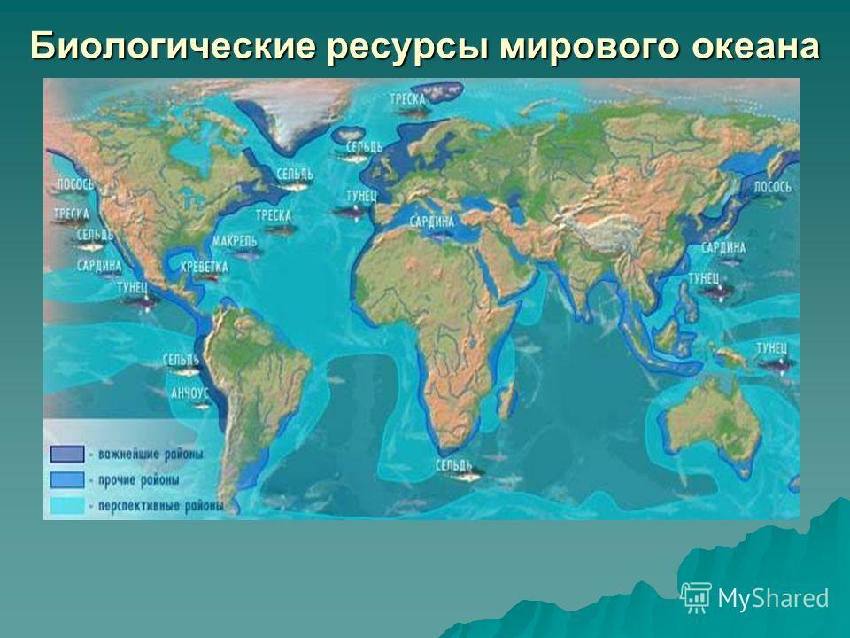 Биологические ресурсы мирового океана
