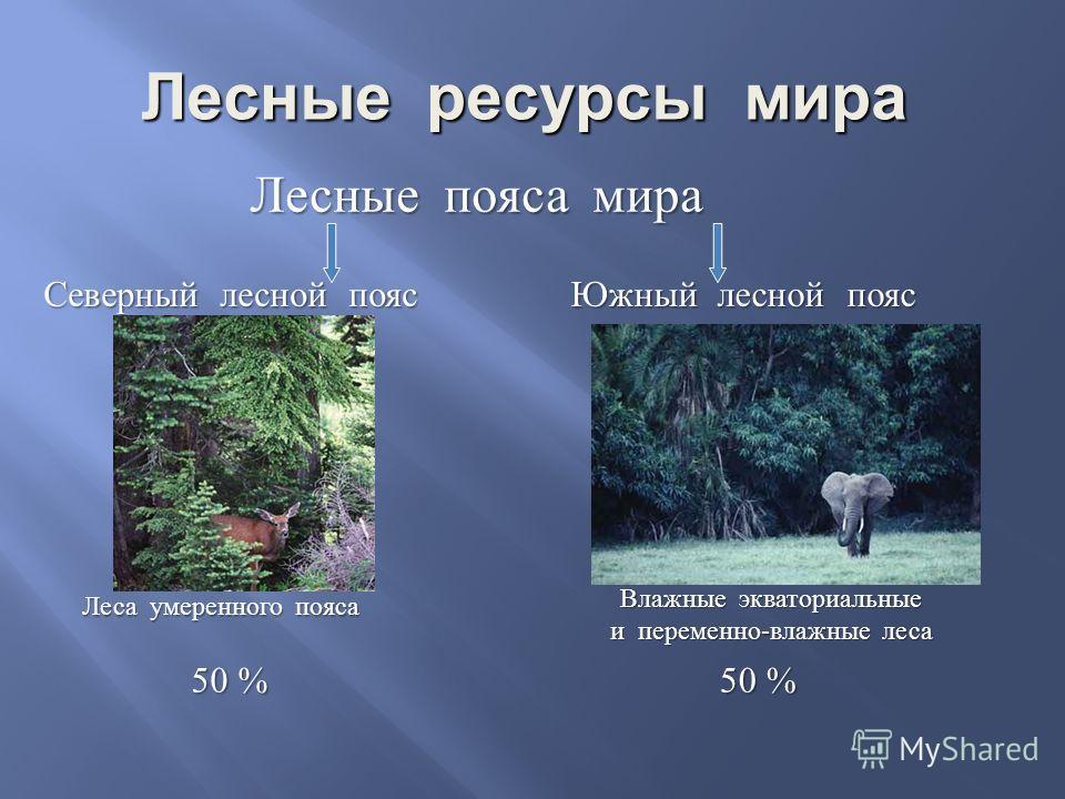 Лесные ресурсы мира Лесные пояса мира Северный лесной пояс Южный лесной пояс Леса умеренного пояса Влажные экваториальные и переменно-влажные леса 50 %