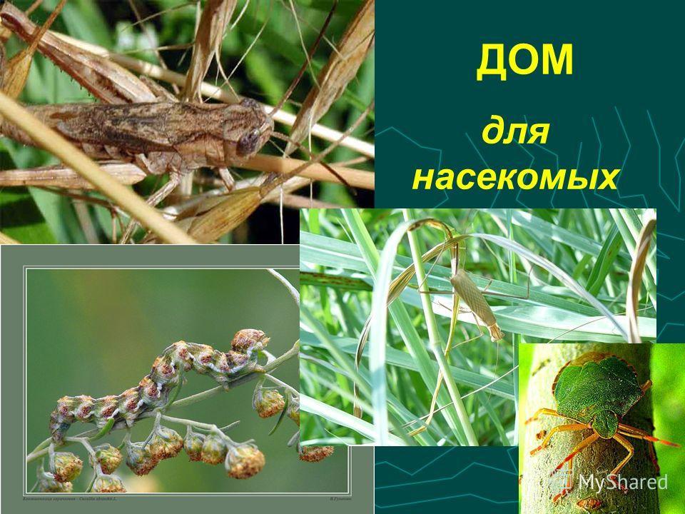 ДОМ для насекомых