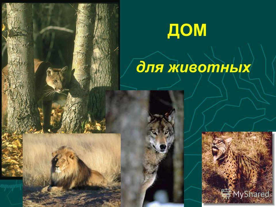 ДОМ для животных