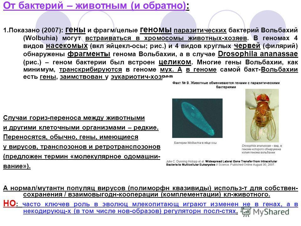 От бактерий – животным (и обратно): 1.Показано (2007): гены и фрагм/целые геномы паразитических бактерий Вольбахий (Wolbuhia) могут встраиваться в хромосомы животных-хозяев. В геномах 4 видов насекомых (вкл яйцекл-осы; рис.) и 4 видов круглых червей