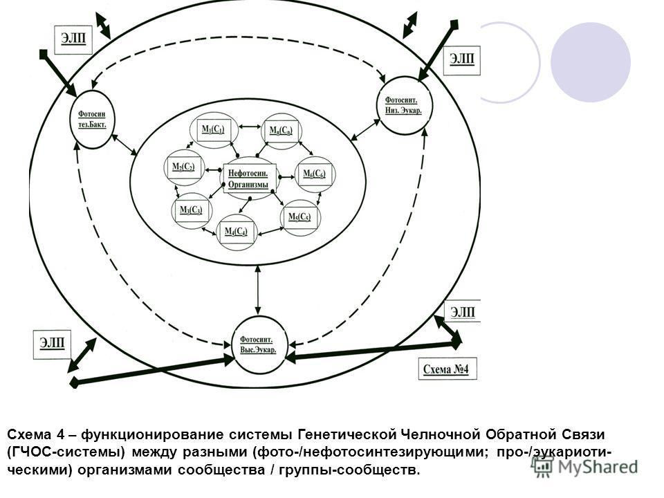 Схема 4 – функционирование системы Генетической Челночной Обратной Связи (ГЧОС-системы) между разными (фото-/нефотосинтезирующими; про-/эукариоти- ческими) организмами сообщества / группы-сообществ.