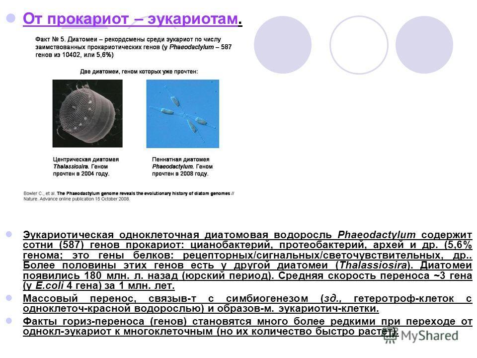 От прокариот – эукариотам. Эукариотическая одноклеточная диатомовая водоросль Phaeodactylum содержит сотни (587) генов прокариот: цианобактерий, протеобактерий, архей и др. (5,6% генома; это гены белков: рецепторных/сигнальных/светочувствительных, др