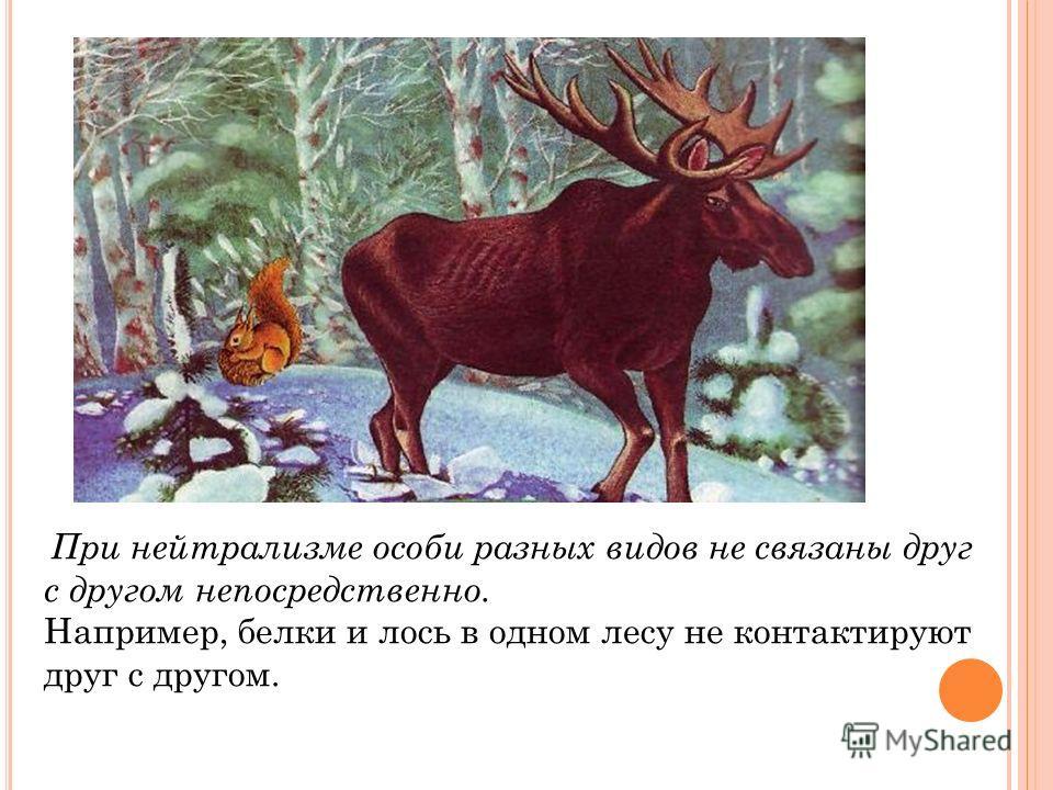 При нейтрализме особи разных видов не связаны друг с другом непосредственно. Например, белки и лось в одном лесу не контактируют друг с другом.
