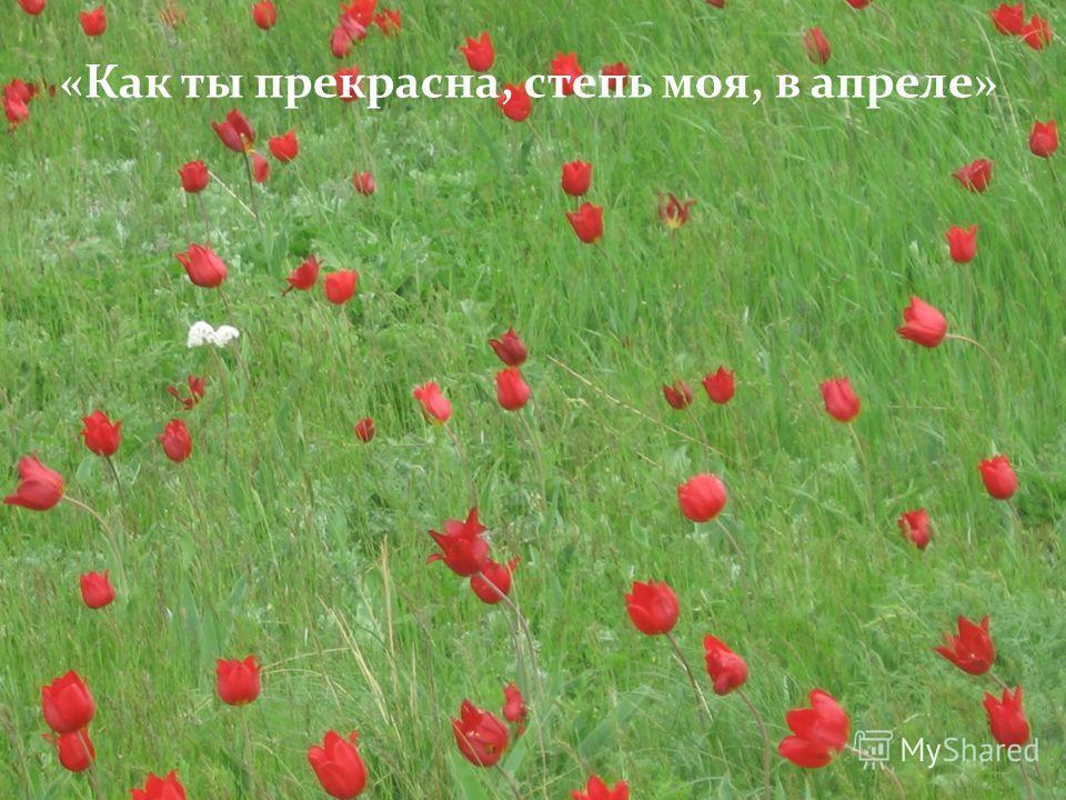 «Как ты прекрасна, степь моя, в апреле»