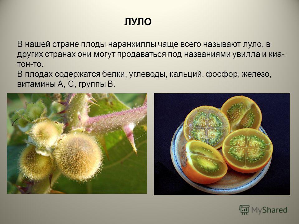 ЛУЛО В нашей стране плоды наранхиллы чаще всего называют луло, в других странах они могут продаваться под названиями увилла и киа- тон-то. В плодах содержатся белки, углеводы, кальций, фосфор, железо, витамины А, С, группы В.