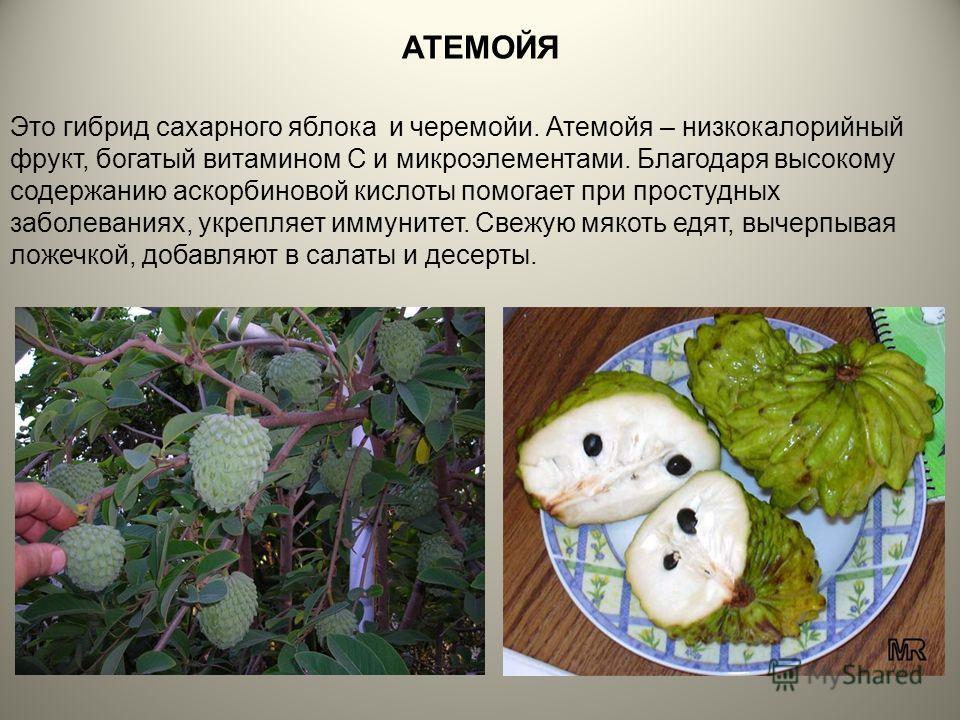 АТЕМОЙЯ Это гибрид сахарного яблока и черемойи. Атемойя – низкокалорийный фрукт, богатый витамином С и микроэлементами. Благодаря высокому содержанию аскорбиновой кислоты помогает при простудных заболеваниях, укрепляет иммунитет. Свежую мякоть едят,
