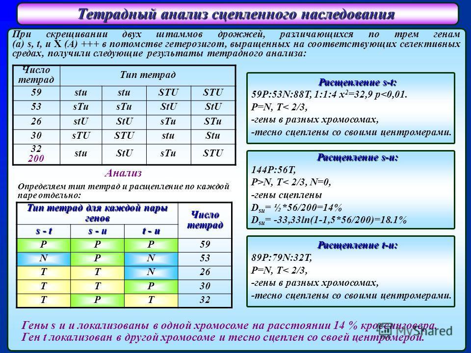 Тетрадный анализ сцепленного наследования При скрещивании двух штаммов дрожжей, различающихся по трем генам (а) s, t, u X (A) +++ в потомстве гетерозигот, выращенных на соответствующих селективных средах, получили следующие результаты тетрадного анал