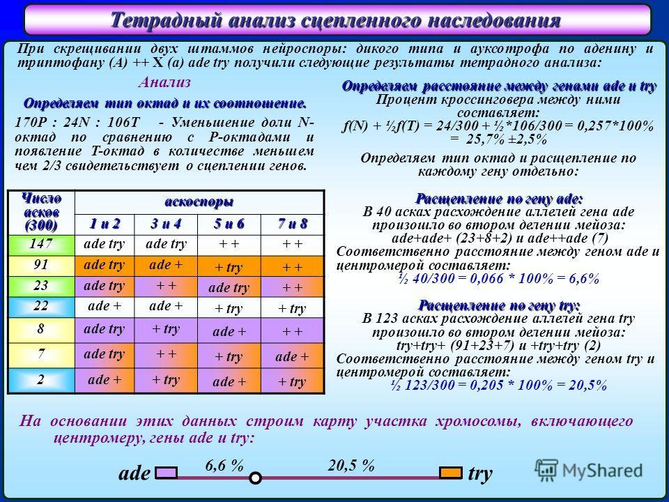Тетрадный анализ сцепленного наследования При скрещивании двух штаммов нейроспоры: дикого типа и ауксотрофа по аденину и триптофану (A) ++ X (a) ade try получили следующие результаты тетрадного анализа: Число асков (300) аскоспоры 1 и 2 3 и 4 5 и 6 7