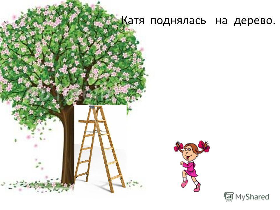 Катя поднялась дерево.на