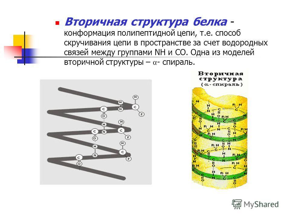 Вторичная структура белка - конформация полипептидной цепи, т.е. способ скручивания цепи в пространстве за счет водородных связей между группами NH и CO. Одна из моделей вторичной структуры – α - спираль.