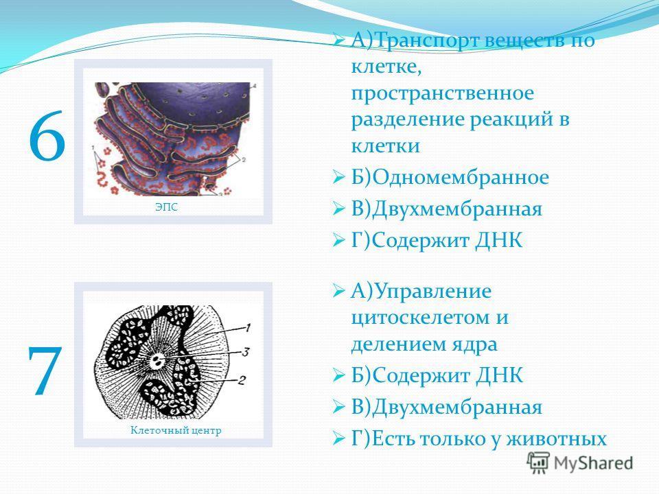 Пластиды А)Фотосинтез Б)Содержит ДНК В)Связь клетки с внешней средой Г)Есть только у растений Рибосомы А)Хранение наследственной информации Б)Немембранные В)Связь клетки с внешней средой Г)Синтез белка 45