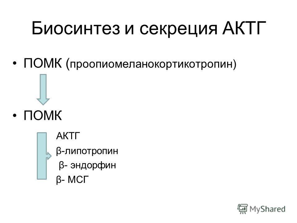 Биосинтез и секреция АКТГ ПОМК ( проопиомеланокортикотропин) ПОМК АКТГ β-липотропин β- эндорфин β- МСГ