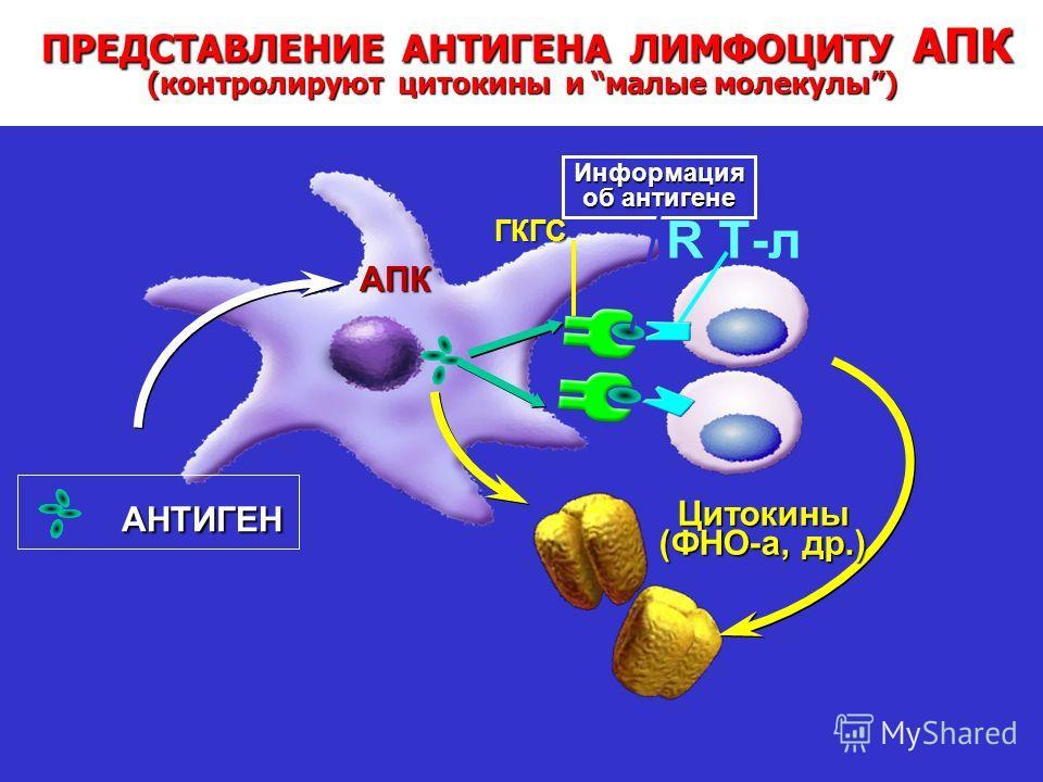 Transforming Thinking in Rheumatoid Arthritis ПРЕДСТАВЛЕНИЕ АНТИГЕНА ЛИМФОЦИТУ АПК (контролируют цитокины и малые молекулы) ПРЕДСТАВЛЕНИЕ АНТИГЕНА ЛИМФОЦИТУ АПК (контролируют цитокины и малые молекулы) АНТИГЕН АНТИГЕН R Т-л ГКГС Информация об антиген