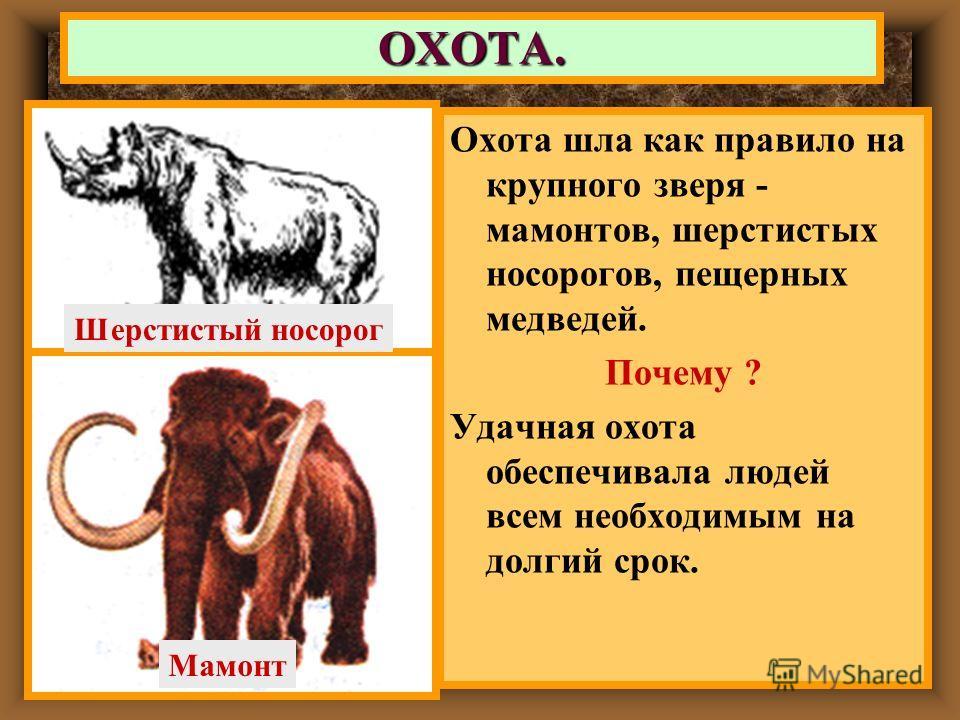 Охота шла как правило на крупного зверя - мамонтов, шерстистых носорогов, пещерных медведей. Почему ? Удачная охота обеспечивала людей всем необходимым на долгий срок. ОХОТА. Шерстистый носорог Мамонт