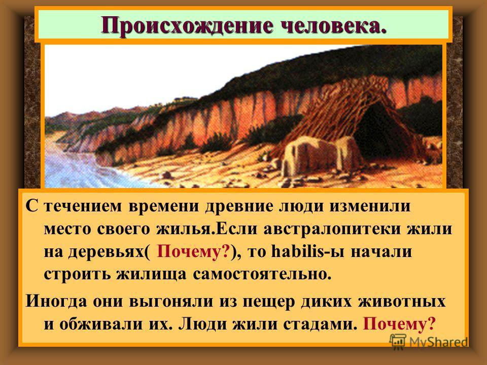 С течением времени древние люди изменили место своего жилья.Если австралопитеки жили на деревьях( Почему?), то habilis-ы начали строить жилища самостоятельно. Иногда они выгоняли из пещер диких животных и обживали их. Люди жили стадами. Почему? Проис
