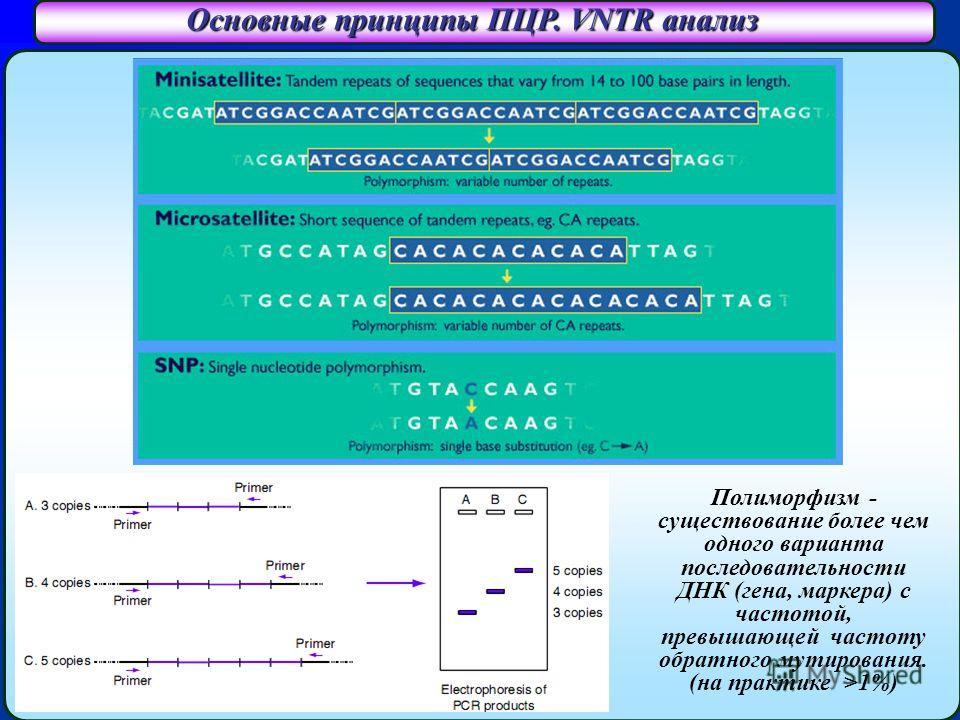Основные принципы ПЦР. VNTR анализ Полиморфизм - существование более чем одного варианта последовательности ДНК (гена, маркера) с частотой, превышающей частоту обратного мутирования. (на практике >1%)