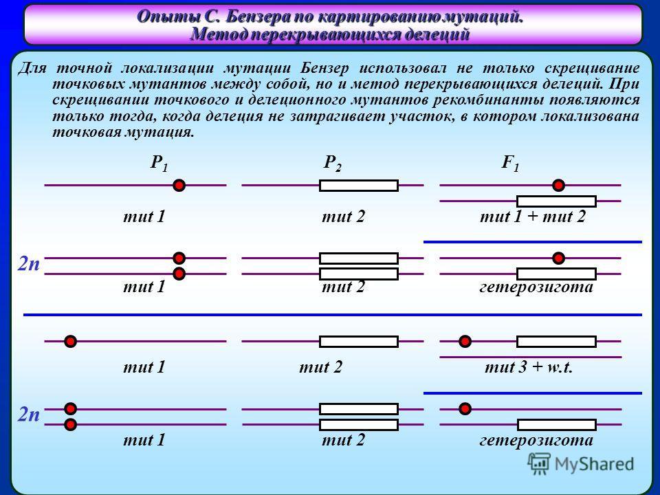 Для точной локализации мутации Бензер использовал не только скрещивание точковых мутантов между собой, но и метод перекрывающихся делеций. При скрещивании точкового и делеционного мутантов рекомбинанты появляются только тогда, когда делеция не затраг