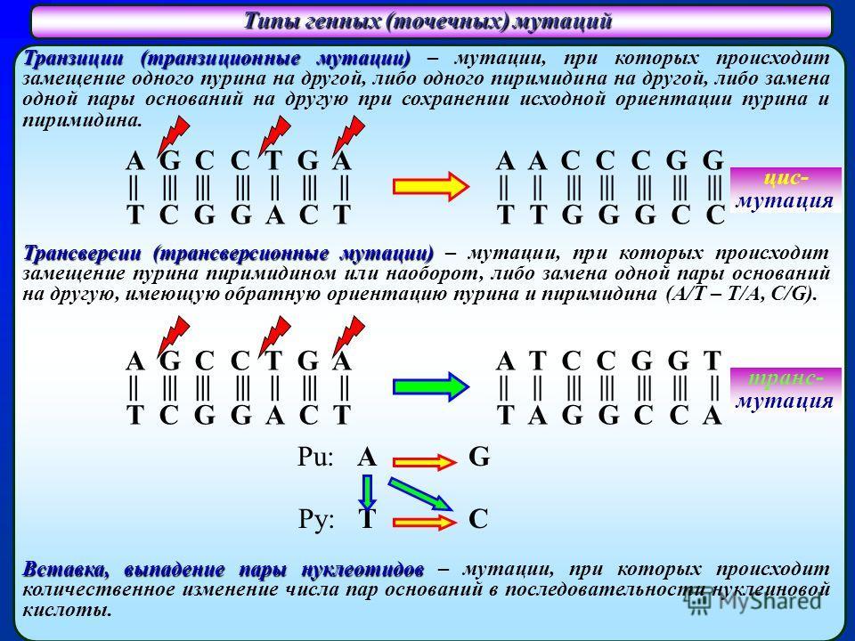 Типы генных (точечных) мутаций Вставка, выпадение пары нуклеотидов Вставка, выпадение пары нуклеотидов – мутации, при которых происходит количественное изменение числа пар оснований в последовательности нуклеиновой кислоты. Транзиции (транзиционные м