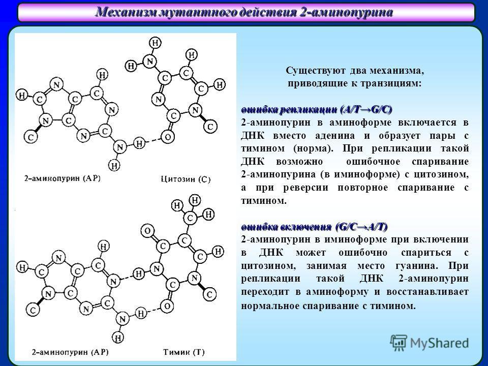 Механизм мутантного действия 2-аминопурина Существуют два механизма, приводящие к транзициям: ошибка репликации (A/TG/C) 2-аминопурин в аминоформе включается в ДНК вместо аденина и образует пары с тимином (норма). При репликации такой ДНК возможно ош