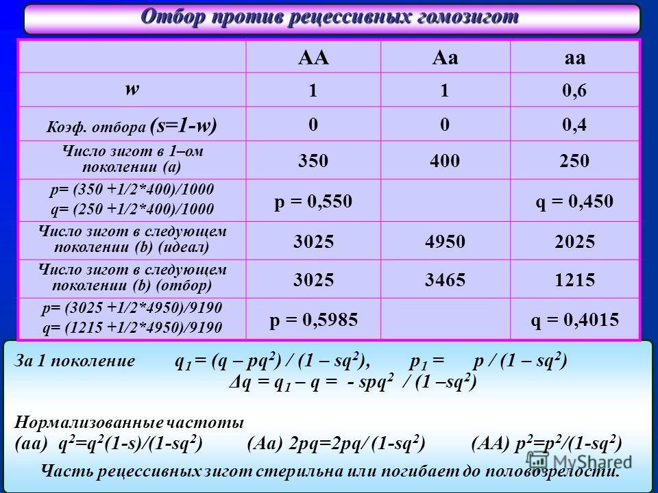 Отбор против рецессивных гомозигот За 1 поколение q 1 = (q – pq 2 ) / (1 – sq 2 ), p 1 = p / (1 – sq 2 ) Δq = q 1 – q = - spq 2 / (1 –sq 2 ) Нормализованные частоты (aa) q 2 =q 2 (1-s)/(1-sq 2 ) (Aa) 2pq=2pq/ (1-sq 2 ) (AA) p 2 =p 2 /(1-sq 2 ) Часть