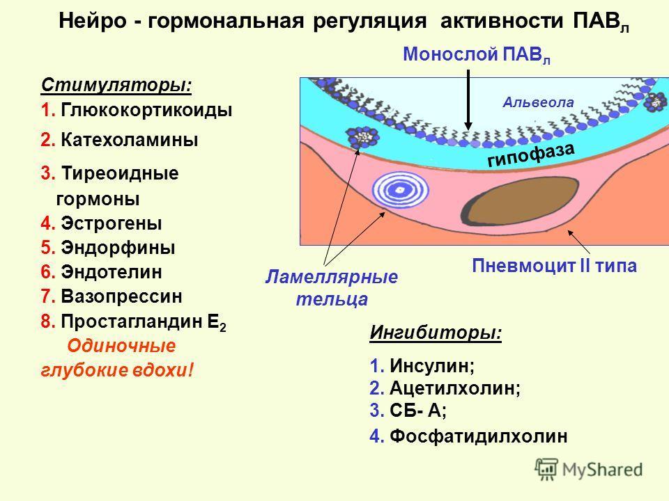 Нейро - гормональная регуляция активности ПАВ л Ингибиторы: 1. Инсулин; 2. Ацетилхолин; 3. СБ- А; 4. Фосфатидилхолин гипофаза Пневмоцит II типа Монослой ПАВ л Стимуляторы: 1. Глюкокортикоиды 2. Катехоламины 3. Тиреоидные гормоны 4. Эстрогены 5. Эндор