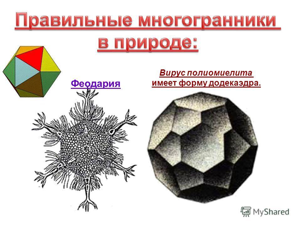 Вирус полиомиелита имеет форму додекаэдра. Феодария