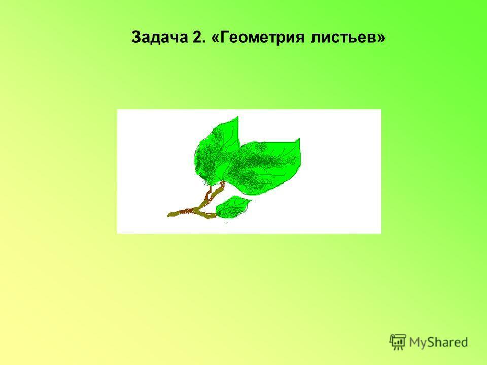 Задача 2. «Геометрия листьев»