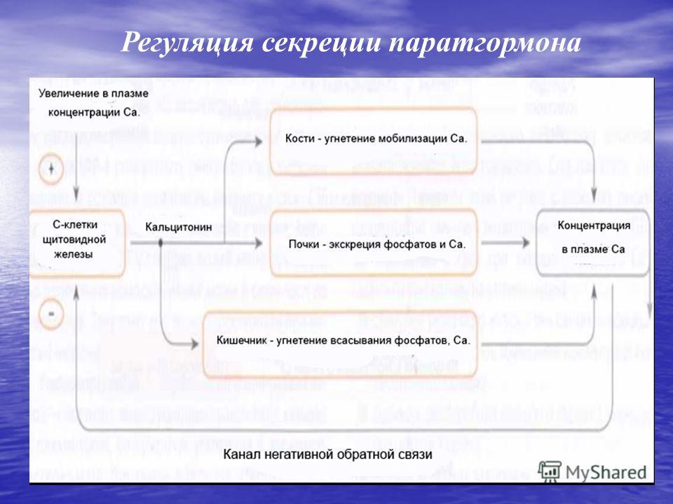 Регуляция секреции паратгормона