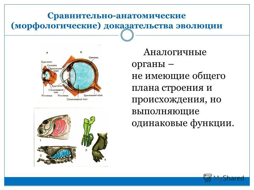 Аналогичные органы – не имеющие общего плана строения и происхождения, но выполняющие одинаковые функции.