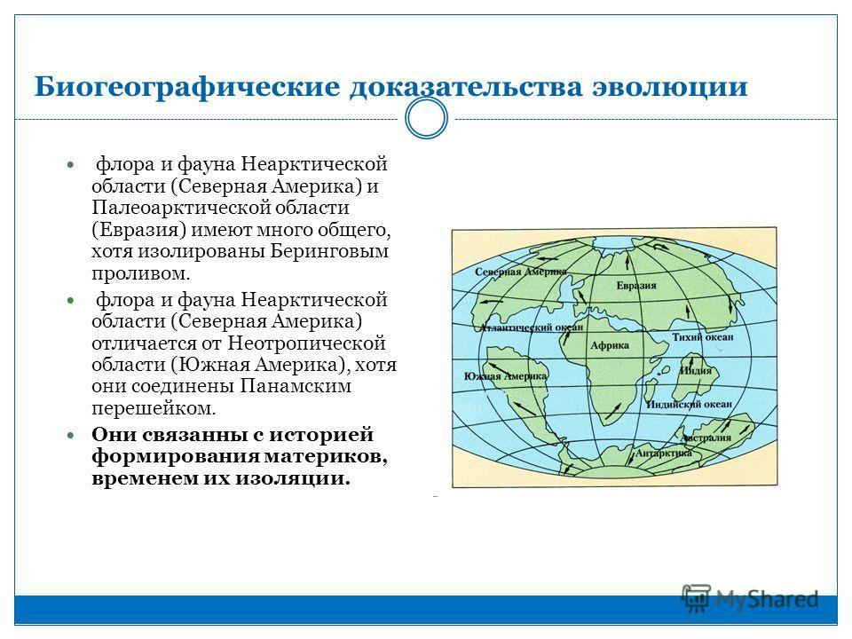 Биогеографические доказательства эволюции флора и фауна Неарктической области (Северная Америка) и Палеоарктической области (Евразия) имеют много общего, хотя изолированы Беринговым проливом. флора и фауна Неарктической области (Северная Америка) отл