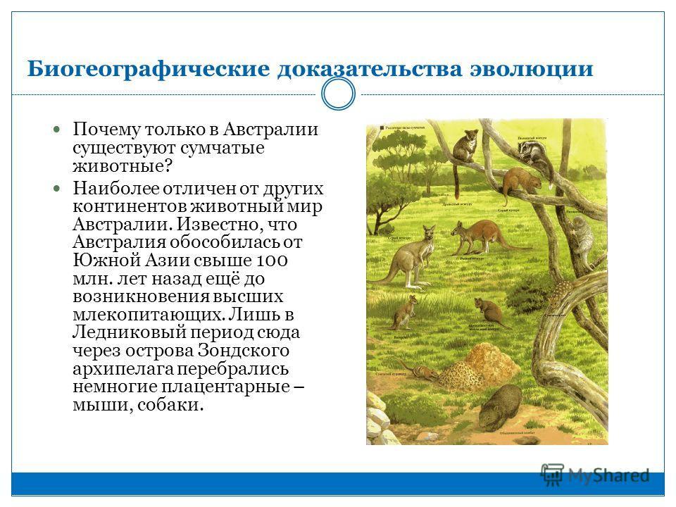 Биогеографические доказательства эволюции Почему только в Австралии существуют сумчатые животные? Наиболее отличен от других континентов животный мир Австралии. Известно, что Австралия обособилась от Южной Азии свыше 100 млн. лет назад ещё до возникн