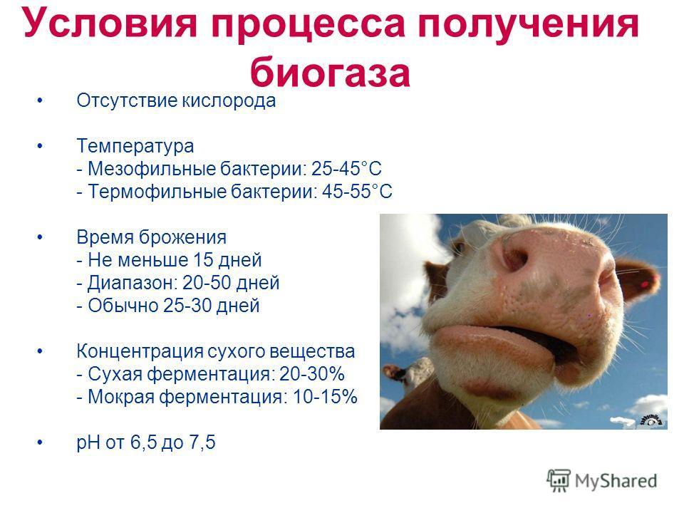 Условия процесса получения биогаза Отсутствие кислорода Температура - Мезофильные бактерии: 25-45°C - Термофильные бактерии: 45-55°C Время брожения - Не меньше 15 дней - Диапазон: 20-50 дней - Обычно 25-30 дней Концентрация сухого вещества - Сухая фе